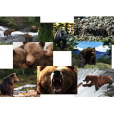8 Beren kaarten - set A