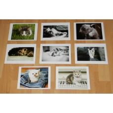 8 Kitten kaarten - set A