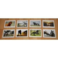 8 Paarden kaarten - set A